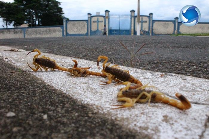 Escorpiões que foram mortos por vizinhos em suas casas